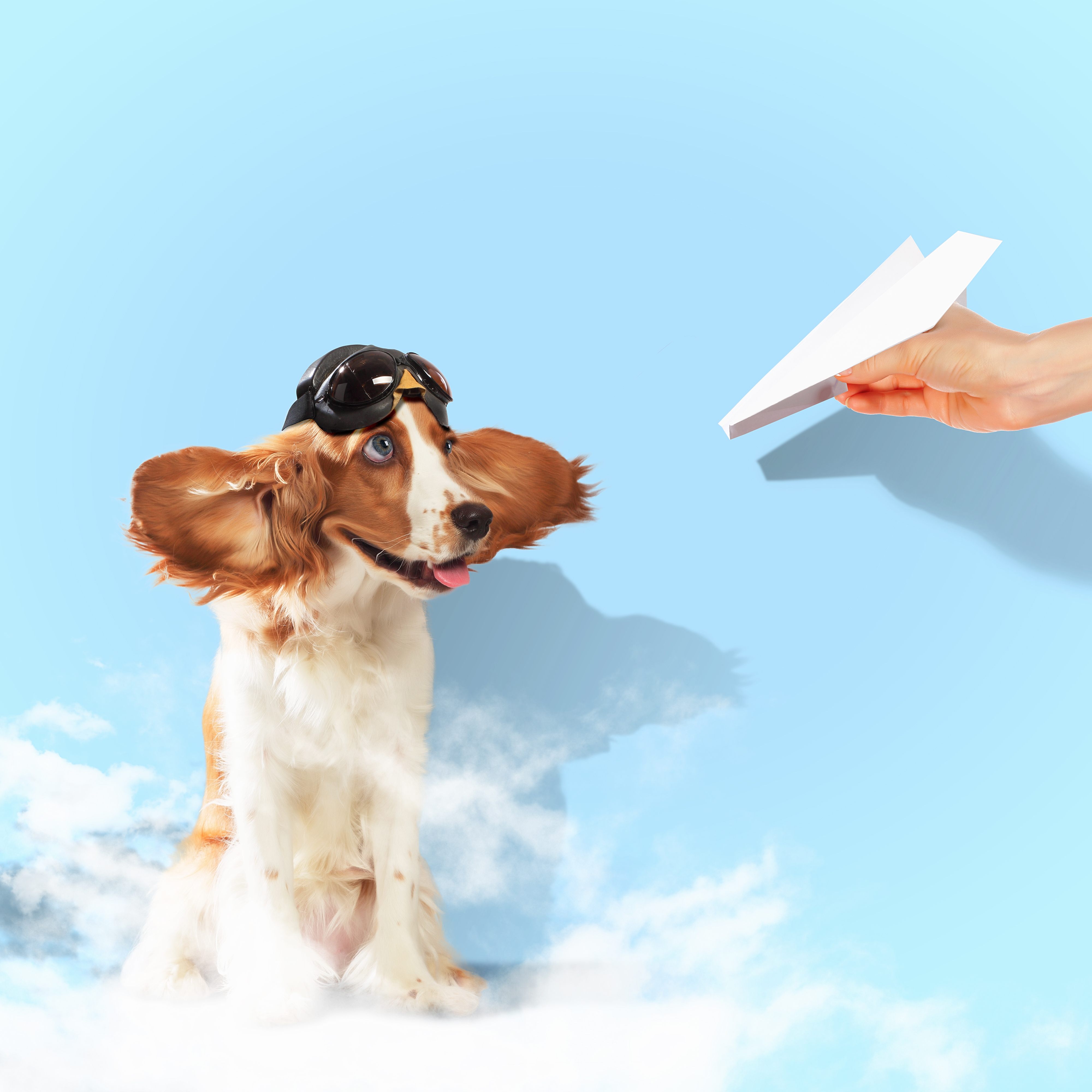 Image of Flying With Pets at SJC